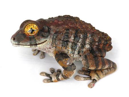 Frog #159 - Brown Treefrog