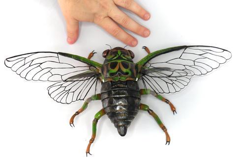 Eastern green cicada