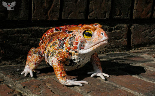 Toad #87 - Red American Toad