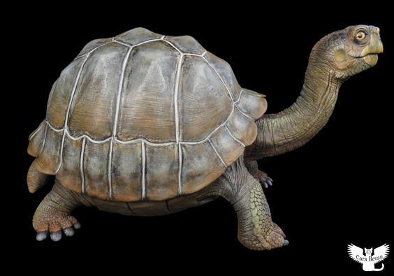 """Eve"" the Pinta Island Tortoise. #HR15"