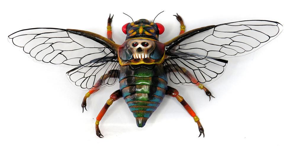 Death Head Cicada
