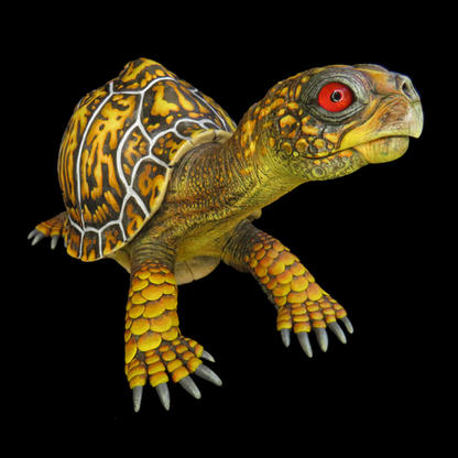 """Earl"" the Eastern Box Turtle. #HR18"