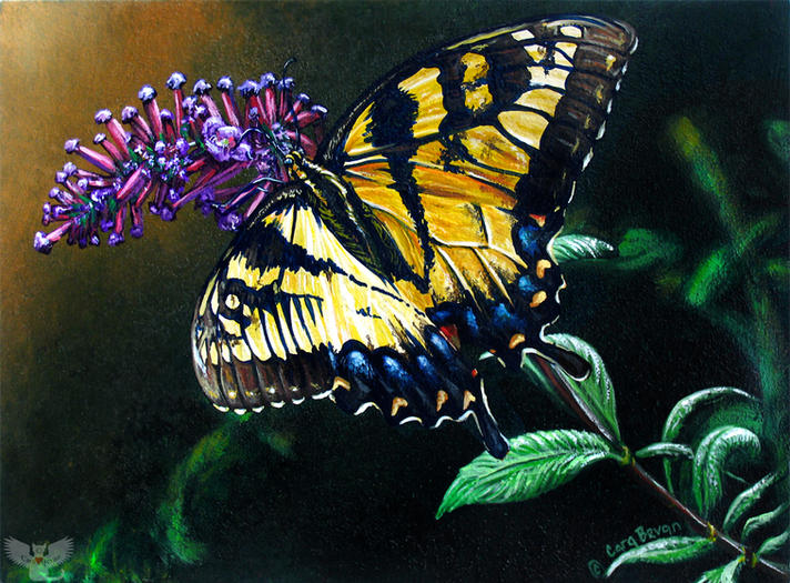 Swallowtail Bounty