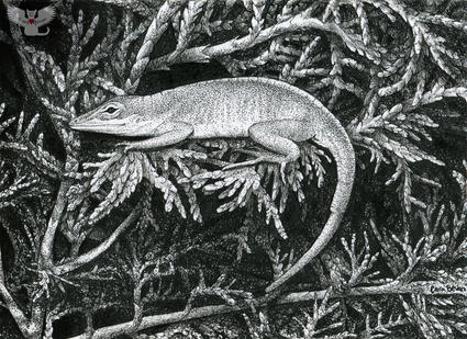 Anole Loafer