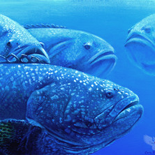 Group-of-Groupers.jpg