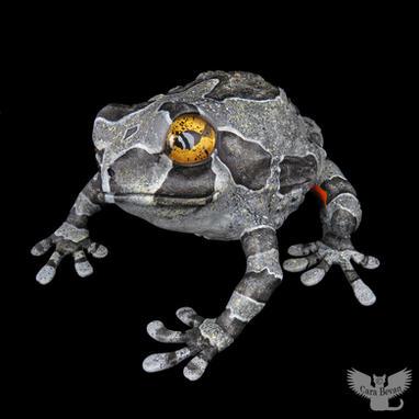 Frog #157 - Common Treefrog