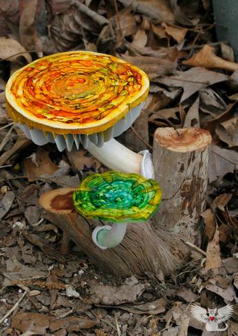 Mushroom #4