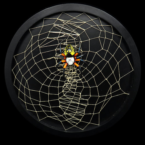 Writing Spider and Web