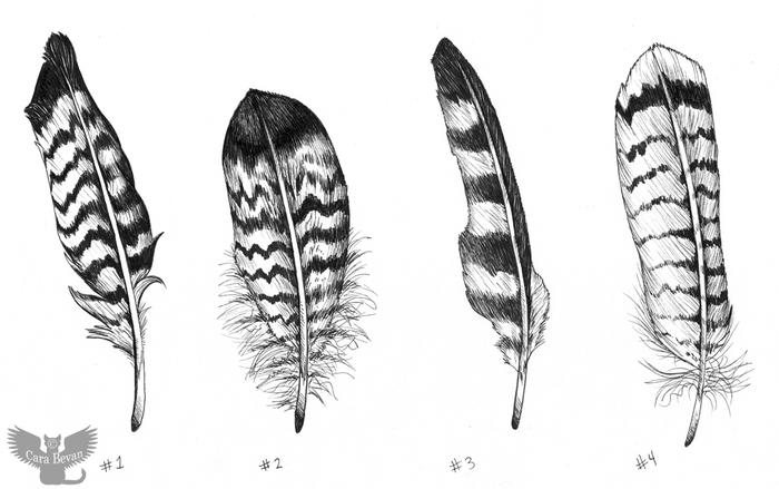 Feather diagram