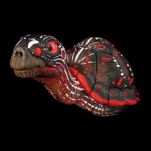 Black spider-eyed Turtle