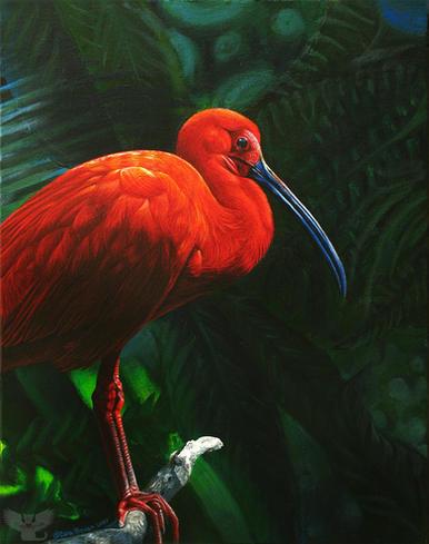 Rainforest Ruby