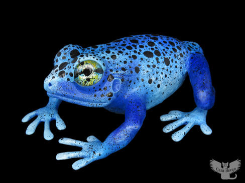 Frog #158 - Blue Dart Frog