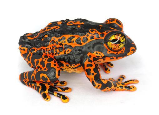 Frog #155 - Orange Harlequin Dart Frog