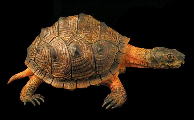 Wood Turtle, #HR11
