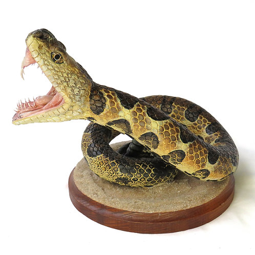 Biting Rattlesnake sculpture