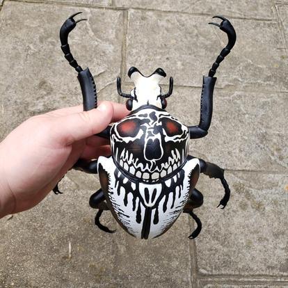 Skull Goliath Beetle