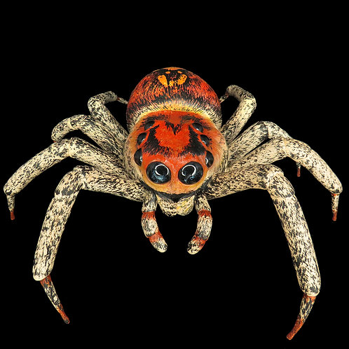 Giant Jumping spider wall hanging sculpture