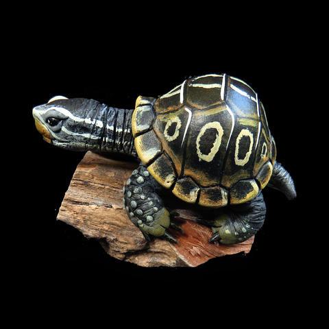 Miniature Turtle #21