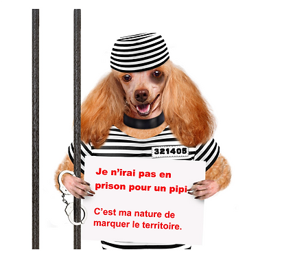 Chien prisonnier MDPCG Genève Chiens