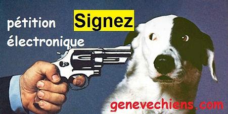 Signez Colt Genève Chiens
