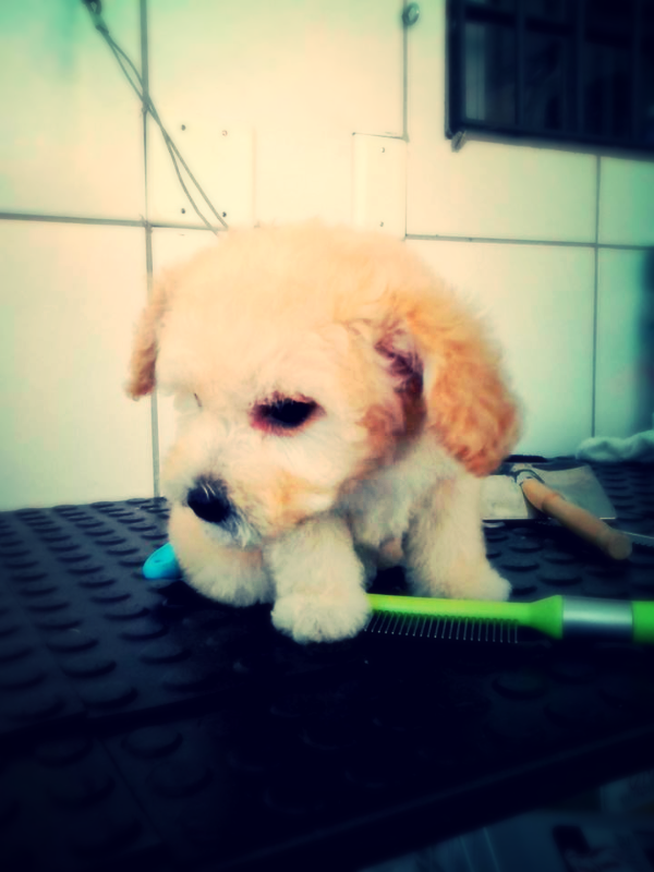 banho+e+tosa+cara+do+bicho_edited