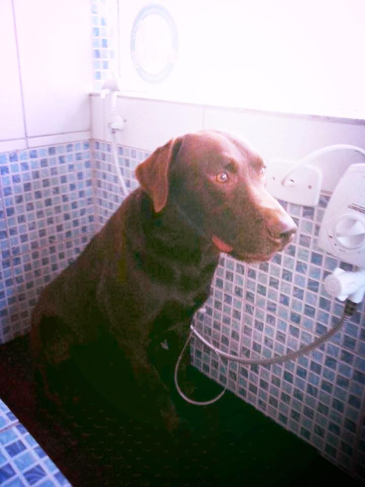 Banho e Tosa Cara do Bicho