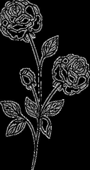 vintage-flowers-rose-3_edited_edited_edi