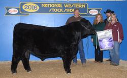 cropped-Champion bull