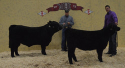 NILE champion progeny of dam comp
