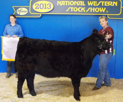 2013 NWSS champion heifer calf