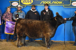 2014 NWSS- grand Champion Female