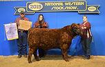 reserve champion bull.jpg