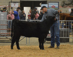 nile percentage champion heifer