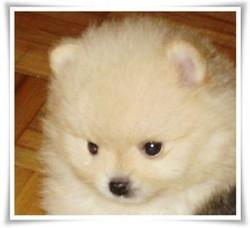 pup112009