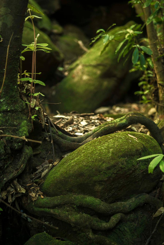 Sassafras Gully, a world of moss.
