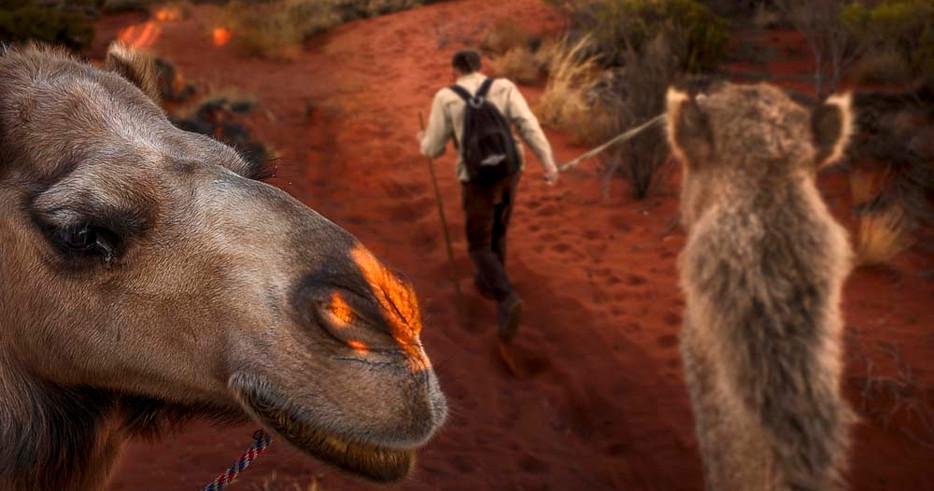 Outback Camels