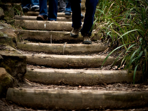 Step out for Blue Mountains Lithgow and Oberon Festival of Walking