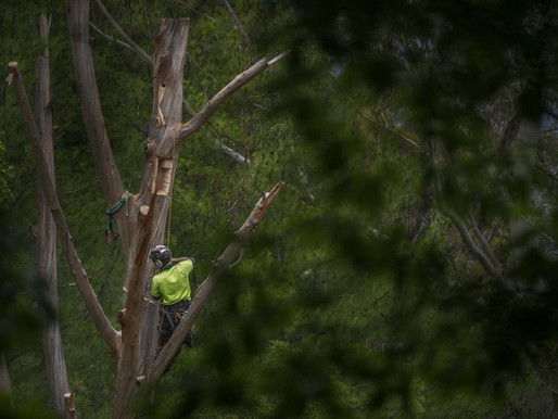 Tree change for wildlife at Everglades, Blue Mountains
