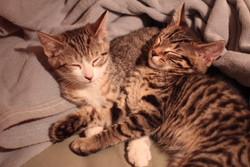 Loki and Nyx