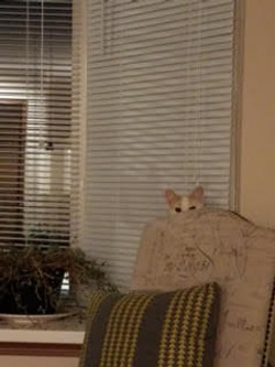Who is peeking