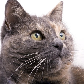 RESCUE SPOTLIGHT: Manhattan Valley Cat Rescue