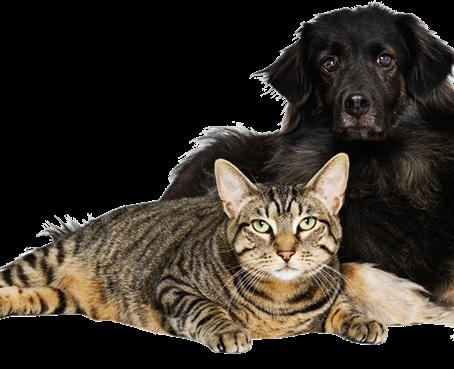RESCUE SPOTLIGHT: Pet-I-Care