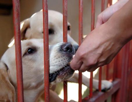 Shelter Dog Training