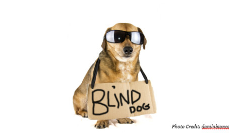 Love Is Blind: Adopting a Visually Impaired Cat or Dog