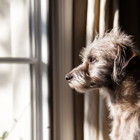 Preparing for the Storm After the Calm:Preventing and Treating Separation Anxiety in Pets