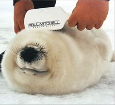 NO-ANIMAL-TESTING.png