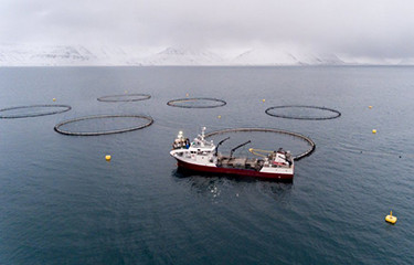 How aquaculture can increase food security