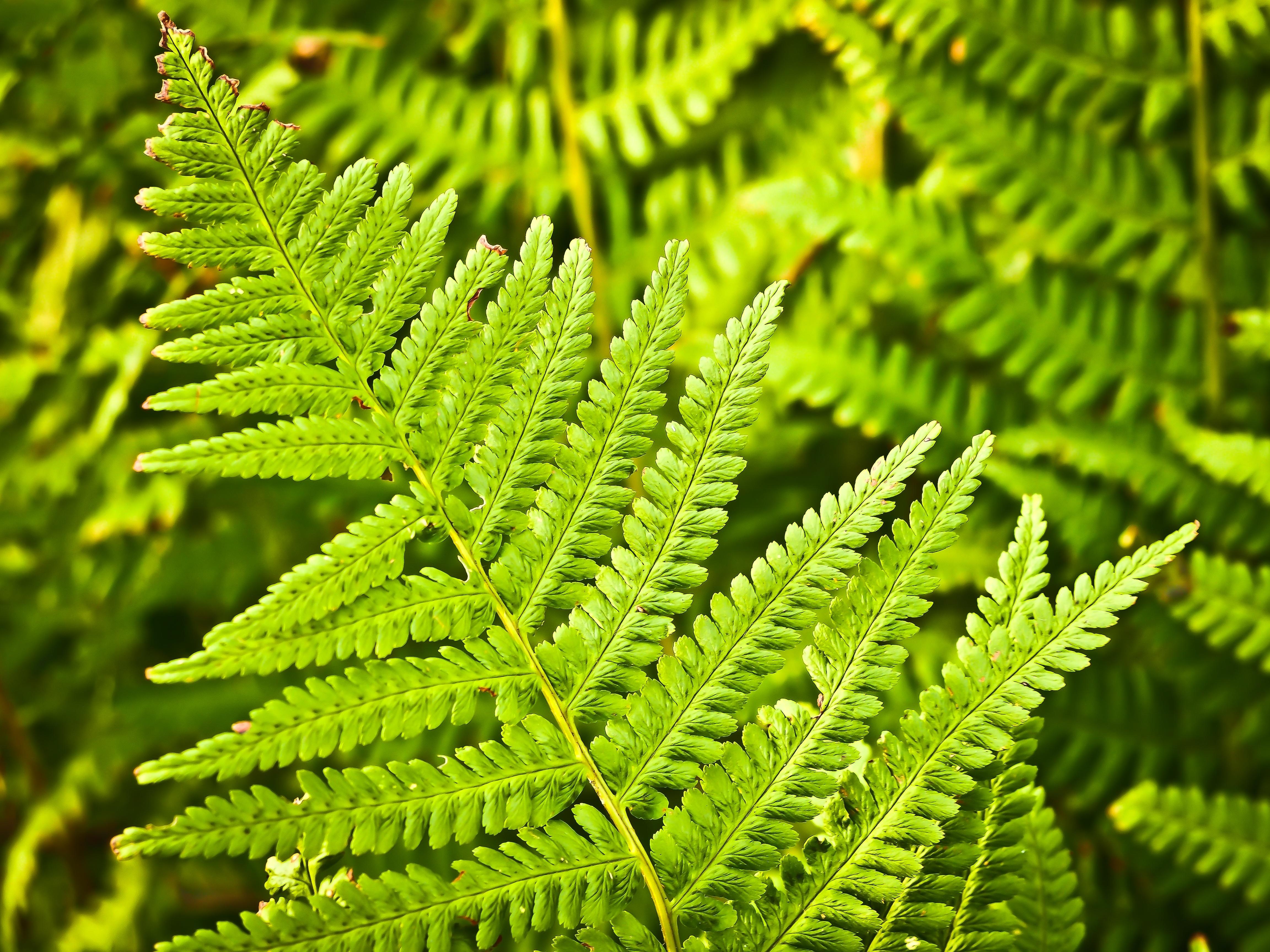 fern-nature-green-plant