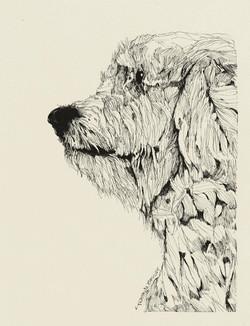 The Shaggy White Dog