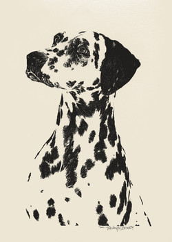 Dalmation...Where's the fire?